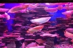 Akuarium-murah-dari-akrilik-berukuran-tebal-FILEminimizer