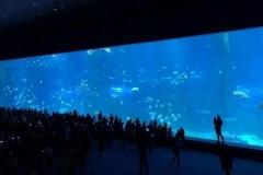 Akuarium-super-raksasa-pertunjukan-ikan-FILEminimizer