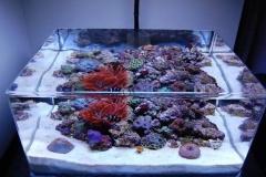 Aquarium-akrilik-dengan-custom-bentuk-di-surabaya-FILEminimizer
