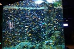 Aquarium-akrilik-terbaik-dan-custom-bentuk-FILEminimizer