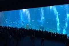 Aquarium-bawah-laut-berkualitas-dari-akrilik-FILEminimizer