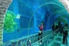 Aquarium-bawah-tanah-dengan-ukuran-sesuai-permintaan-FILEminimizer