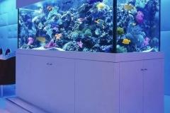 Aquarium-besar-untuk-pertunjukan-terumbu-karam-FILEminimizer