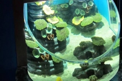 Aquarium-custom-bentuk-air-tawar-FILEminimizer