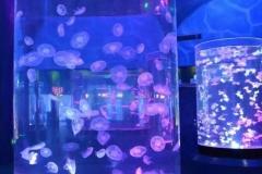 Aquarium-custom-bentuk-tabung-dari-akrilik-FILEminimizer