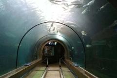 Aquarium-raksasa-akrilik-bahan-terbaik-berkualitas-FILEminimizer