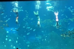 Aquarium-raksasa-diving-cutom-FILEminimizer