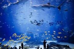 Aquarium-ukuran-besar-ikan-hiu-pertunjukan-FILEminimizer