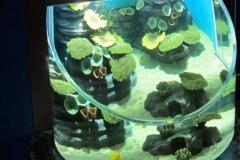 Aquarium-ukuran-khusus-akrilik-tebal-FILEminimizer