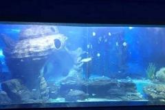Beli-Akuarium-dengan-kualitas-terbaik-FILEminimizer