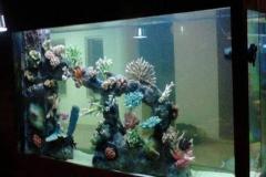 Beli-Aquarium-air-tawar-dengan-kualitas-terbaik-FILEminimizer
