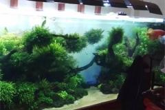 Beli-Aquarium-hotel-dan-restoran-FILEminimizer