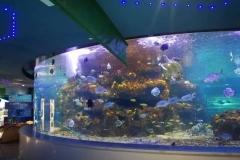 Beli-akuarium-besar-untuk-musium-FILEminimizer