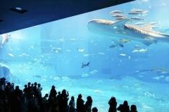 Beli-akuarium-pertunjukan-ikan-hiu-besar-FILEminimizer