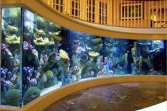 Beli-aquarium-custom-di-surabaya-dan-jakarta-FILEminimizer