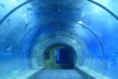 Harga-akuarium-air-laut-lengkap-FILEminimizer