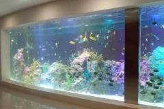 Harga-akuarium-ikan-dari-akrilik-tebal-FILEminimizer