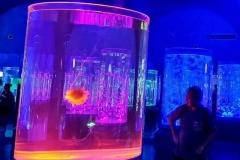 Harga-custom-aquarium-dengan-bentuk-tabung-FILEminimizer