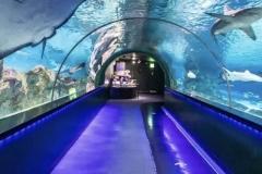 Jasa-pembuatan-Aquarium-bawah-laut-FILEminimizer