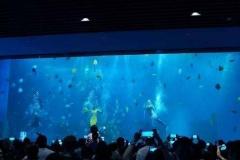Jasa-pembuatan-Big-aquarium-FILEminimizer