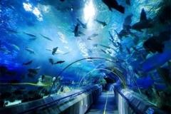Jasa-pembuatan-Sea-water-aquarium-FILEminimizer