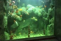 Jasa-pembuatan-akuarium-aquascape-FILEminimizer