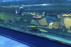 Jasa-pembuatan-akuarium-pertunjukan-dalam-air-FILEminimizer