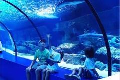 Jasa-pembuatan-akuarium-seperti-Aquarium-Taman-Pintar-FILEminimizer