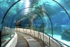 Jasa-pembuatan-dan-pemasangan-Aquarium-bawah-laut-FILEminimizer