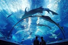 akuarium-besar-kan-hiu-murah-FILEminimizer