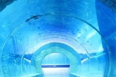 akuarium-tembik-berkualitas-pertunjukan-ikan-FILEminimizer