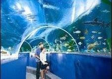 aquarium-super-besar-pembuatan-dan-pemasangan-FILEminimizer