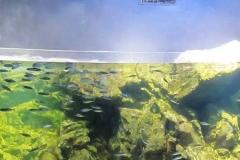 jasa-Custom-akuarium-berkualitas-di-surabaya-FILEminimizer
