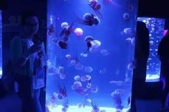 jasa-pembuatan-Aquarium-akrilik-FILEminimizer