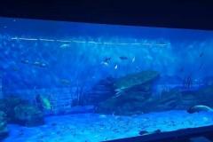 Akuarium-akrilik-tebal-dan-mewah-untuk-ikan-FILEminimizer