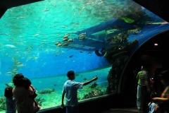 Akuarium-besar-wahana-wisata-berkualitas-FILEminimizer