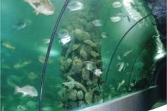 Akuarium-pertunjukan-ikan-berkualitas-dari-akrilik-FILEminimizer