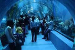 Pembuatan-Giant-akuarium-berkualitas-FILEminimizer