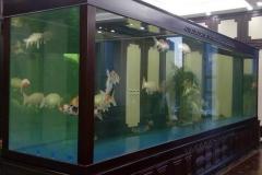 Pesan-aquarium-berkualitas-dari-akrilik-FILEminimizer
