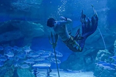 Sea-water-aquarium-untuk-tempat-wisata-FILEminimizer