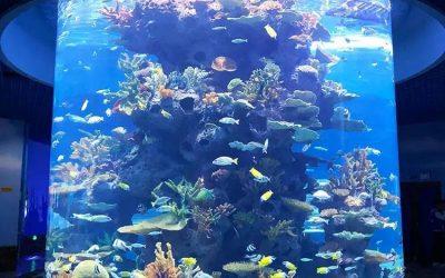 Beli aquarium tabung kapasitas besar – CALL/WA: 081803215590