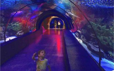 Jasa Pembuatan Giant Aquarium Berkualitas – CALL/WA: 081803215590