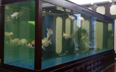 Harga Aquarium berkualitas – CALL/WA: 081803215590
