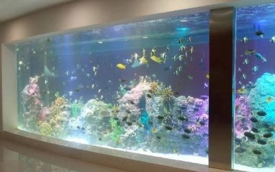 Harga akuarium ikan dari akrilik tebal – CALL/WA: 081803215590