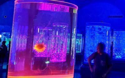 Harga custom aquarium dengan bentuk tabung – CALL/WA: 081803215590